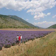Δήμος Κοζάνης: Ανάδειξη της καλλιέργειας των Αρωματικών Φαρμακευτικών Φυτών της περιοχής με στοχευμένες δράσεις