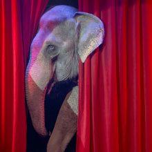 Η τρίτη εβδομάδα του Θερινού Καλλιτεχνικού Εργαστηρίου του Δη.Πε.Θε. Κοζάνης ξεκινάει13-17 Ιουλίου:  «Ο Αλυσοδεμένος Ελέφαντας» του Χόρχε Μπουκάι!!
