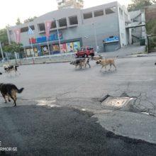 Αναφορά αναγνώστη στο kozan.gr: Αυτή είναι η κατάσταση με τα αδέσποτα στην περιοχή του Τρίκου στην Κοζάνη (Φωτογραφίες)