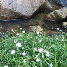 Δήμος Γρεβενών: Δρομολόγηση Δράσεων Προστασίας και Ασφάλειας των Υδάτων