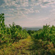 """""""Οινοποιείο ΝΑΚΟΣ"""": Έναρξη του έργου WineLiveLabel για την ανάδειξη προϊόντων οίνου με την χρήση των τεχνολογιών AR (Augmented Reality) στη σήμανσή τους"""