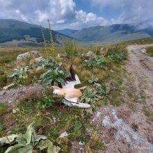 Φλώρινα: Βρέθηκαν τρεις νεκροί ροδοπελεκάνοι