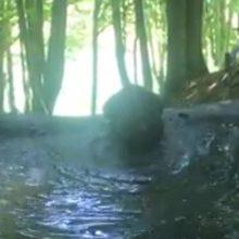Ποιος είπε ότι οι αρκούδες στο Καταφύγιο του Αρκτούρου δεν κάνουν τις καλοκαιρινές βουτιές τους; (Βίντεο)