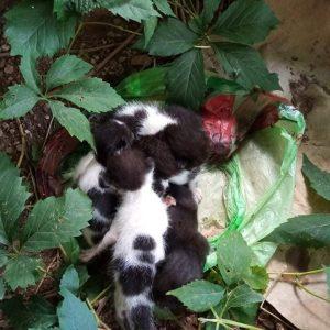 kozan.gr: Κοζάνη: Πέταξαν έξι νεογέννητα γατάκια μέσα σε σακούλα σκουπιδιών στην περιοχή του Ξενία