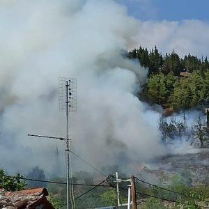 Συναγερμός στην Τσαριτσάνη Ελλασόνας: Φωτιά σε δασική έκταση κοντά στο χωριό   (Φωτογραφίες)