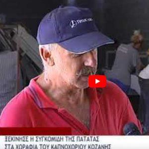 Ξεκίνησε η συγκομιδή της πατάτας στα χωράφια του Καπνοχωρίου Κοζάνης – μειωμένες παραγωγή και τιμή (Βίντεο)
