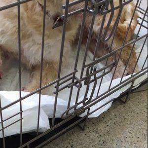 Βρέθηκε η σκυλίτσα της φωτογραφίας στον Σιδηροδρομικό Σταθμό Κοζάνης – Έχει χτυπημένο ποδαράκι