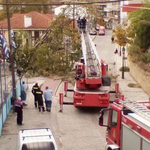 kozan.gr: Έγειρε δέντρο, λόγω δυνατών ανέμων, στην Αιανή – Στο σημείο η πυροσβεστική, για να το κόψει με ασφάλεια, προτού πέσει μέσα στο δρόμο (Βίντεο)