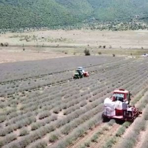 kozan.gr: Tο spot της Επιτροπής «Ελλάδα 2021»με τα δύο μοναδικά προϊόντα που καλλιεργούνται στην Κοζάνη, κρόκος και λεβάντα (Βίντεο)