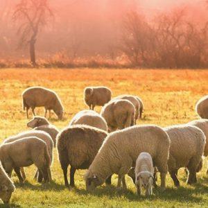Κτηνοτρόφοι Π.Ε. Κοζάνης: Ενός κακού μύρια έπονται…. (Από Agrovoice.gr)
