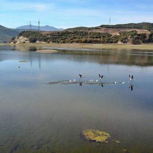 Η χθεσινή, μεσημεριανή, φωτογραφία του συμπολίτη μας, Σ. Ανδρουλιδάκη, με τα φλαμίνγκο στη λίμνη από την πλευρά του Ρυμνίου