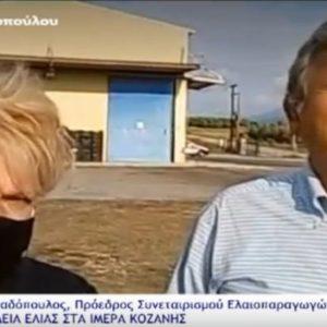 Ξεκίνησε η συγκομιδή ελιάς στα Ίμερα Σερβίων (Βίντεο)