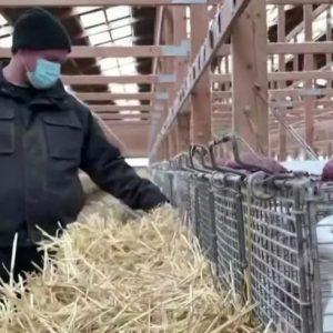 Καστοριά: Όχι σε φάρμες γουνοφόρων λένε οι κάτοικοι των Κορεστείων