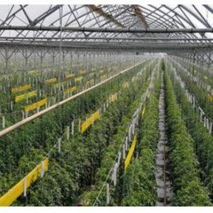 Πτολεμαΐδα: Θερμοκήπιο, για παραγωγή  λουλουδιών και φυτών, προτείνει ο σύλλογος γονέων Α.με.Α Εορδαίας