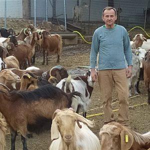 Μαθήματα επιχειρείν με 1200 γίδια στην Κοζάνη και στόχο ετικέτα σε τυρί και γιαούρτι