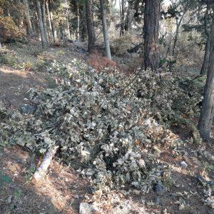 """Σχόλιο αναγνώστη στο kozan.gr: """"Δεν πετούν μόνο σκουπίδια στο λόφο του Ξενία αλλά κόβουν και δέντρα"""" (Φωτογραφίες)"""