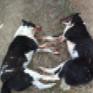 kozan.gr: Καταγγελία αναγνώστη: Σκήτη Κοζάνης: Άγνωστοι έριξαν φόλες σκορπώντας το θάνατο σε δύο αδέσποτα ζώα (Φωτογραφία)