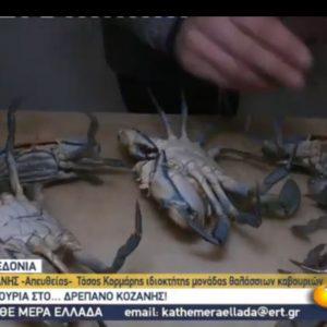 kozan.gr: Θαλάσσια καβούρια…στο Δρέπανο Κοζάνης – Το χθεσινό ρεπορτάζ – ζωντανή σύνδεση της ΕΡΤ3 (Βίντεο)