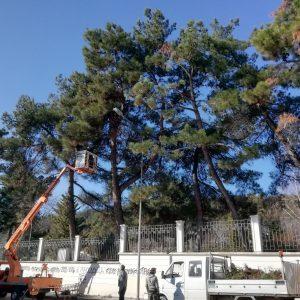 Δήμος Κοζάνης: Συνεχίζονται οι εργασίες συντήρησης πρασίνου στο πλαίσιο της κλαδευτικής περιόδου (Φωτογραφίες)
