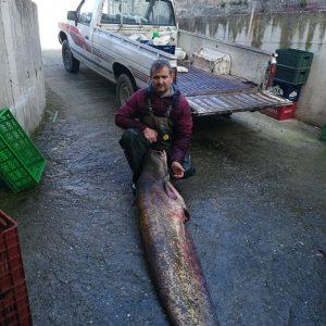 kozan.gr: Γουλιανός, βάρους 80 κιλών, η πρώτη καλή ψαριά, του 2021, για τον Χάρη Μπουντιό και τον αδερφό του Μάρκο, από το Βελβεντό Κοζάνης (Φωτογραφίες)