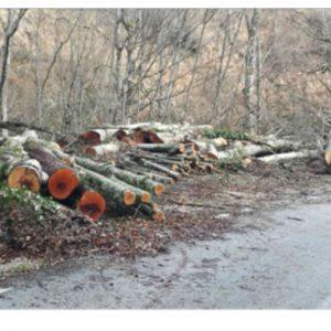 Η ανεξέλεγκτη υλοτομία συνεχίζει να πληγώνει τα δάση – Καταγγελίες για νέα κρούσματα στην περιοχή Βυθού – Πενταλόφου