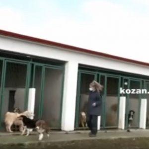 kozan.gr: Σημερινές εικόνες από το Καταφύγιο Αδέσποτων Ζώων του Δήμου Εορδαίας, μέσω της ζωντανής σύνδεσης της ΕΡΤ3 – Δηλώσεις του Αντιδημάρχου Α. Λόφτσαλη (Βίντεο)