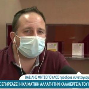 kozan.gr: Από το Κασμίρ μέχρι την Κοζάνη, η παραγωγή κρόκου ή σαφράν μειώνεται λόγω της κλιματικής αλλαγής – Tι λένε για το θέμα o Πρόεδρος του Συνεταιρισμού Βασίλης Μητσόπουλος  & ο Γεωπόνος Δημήτρης Ζυμάρας (Βίντεο)