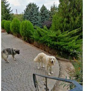 Κοζάνη: Χάθηκαν δύο σκύλοι – Αν κάποιος γνωρίζει κάτι ας επικοινωνήσει μαζί μας