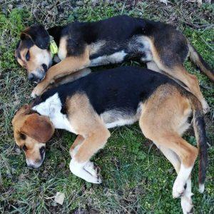 Κυνηγετικός Σύλλογος Εορδαία: ΠΡΟΣΟΧΗ ΦΟΛΕΣ σε Ζώνη Εκγύμνασης Σκύλων!