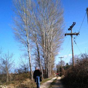 Π.Ε. Κοζάνης: Καθαρισμός υδατορέματος από μεγάλα δέντρα λεύκης στην Τ.Κ. Πρωτοχωρίου