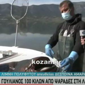 kozan.gr: Η σημερινή ζωντανή σύνδεση της ΕΡΤ3 με τη Λίμνη Πολυφύτου και τα αδέρφια Μπουντιού που αλίευσαν έναν γουλιανό μήκους 2,70 μέτρων και βάρους 137 κιλών  (Βίντεο)
