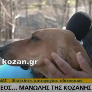 "kozan.gr: Η ιστορία του ""σκελετωμένου"" σκύλου Μανώλη, από την Κοζάνη, που έγινε viral – Mε το ενδιαφέρον, την περίθαλψη, την αγάπη και τη φροντίδα του συμπολίτη μας φιλόζωου Βαγγέλη Λιάνα, ο ""Μανώλης"" αναρρώνει σιγά – σιγά   (Βίντεο)"