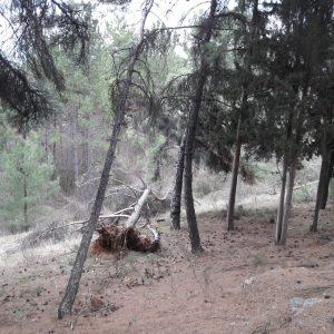 kozan.gr: Σχόλιο αναγνώστη: Πτώσεις δέντρων στην περιοχή του υπαίθριου Δημοτικού Θεάτρου Κοζάνης (Φωτογραφίες)