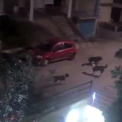 """Παράπονα αναγνώστριας στο kozan.gr: """"Πολλά τα αδέσποτα, στην οδό Πλάτωνος, στην περιοχή του Αγίου Αθανασίου, στην Κοζάνη""""  (Βίντεο)"""