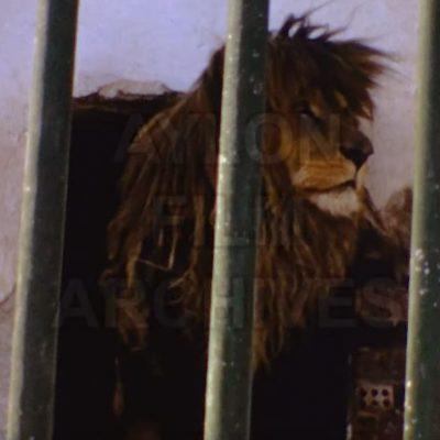 """Φλώρινα 1973: """"Ο ζωολογικός κήπος"""" (Bίντεο)"""