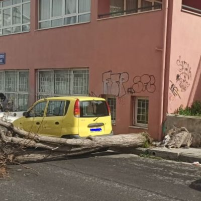 """kozan.gr: """"Έπεσε"""" δέντρο στην οδό Θεσσαλονίκης έξω από το 2ο νηπιαγωγείο Κοζάνης (Φωτογραφίες)"""