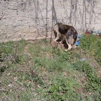 Καστοριά: Η Πυροσβεστική έσωσε σκύλο που σφήνωσε το κεφάλι του σε μαντρότοιχο (Βίντεο)