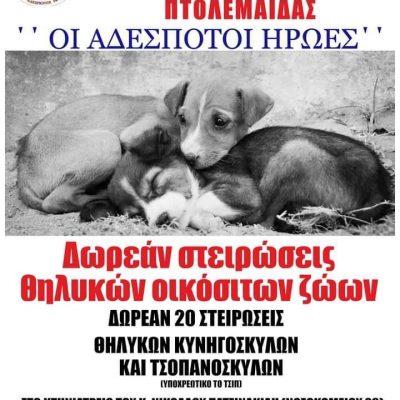 """Φιλοζωικό Σωματείο Προστασίας Αδέσποτων Ζώων Πτολεμαϊδας """"Οι Αδέσποτοι Ήρωες"""": 20 ΔΩΡΕΆΝ στειρώσεις για οικόσιτα ζώα"""