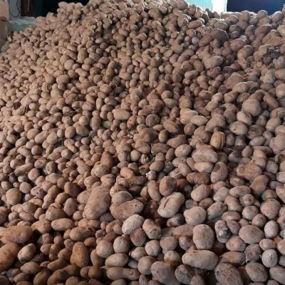 Σε απόγνωση οι πατατοπαραγωγοί στην Καστανιά Σερβίων- Αδιάθετοι 250 τόνοι πατάτας