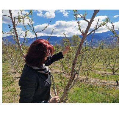 Η Π. Βρυζίδου για τις αποζημιώσεις των δενδροκαλλιεργητών της ΠΕ Κοζάνης εξαιτίας του παγετού