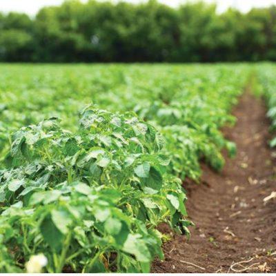 Η σπέσιαλ θρέψη στην καλλιέργεια της πατάτας και το team Πτολεμαΐδας