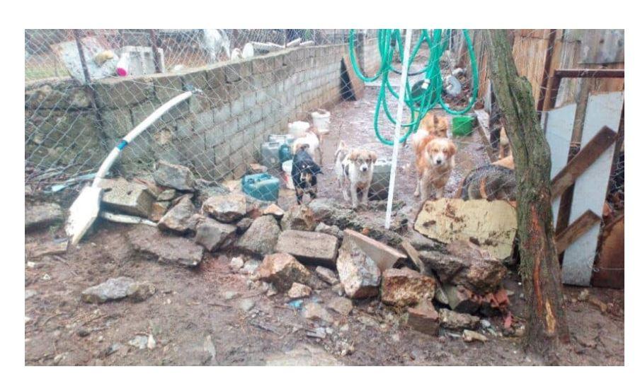 """Σκληρή ανακοίνωση της Πανελλαδικής Φιλοζωικής Περιβαλλοντικής Ομοσπονδίας: """"Βάρβαρες συμπεριφορές Δήμου Σιάτιστας και πολιτών κατά αδέσποτων ζώων στη Σιάτιστα. Κόλαση και το παράνομο δημοτικό κυνοκομείο Σιάτιστας"""""""