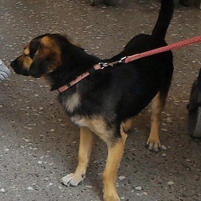 Κοζάνη: Χάθηκε το θηλυκό σκυλάκι της φωτογραφίας – Την αναζητεί ο ιδιοκτήτης της