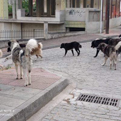 kozan.gr: Πολλά και μαζεμένα σε αγέλη τα αδέσποτα στην Αιανή (Φωτογραφίες)