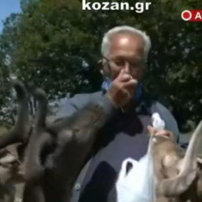 """kozan.gr: Σημερινές εικόνες, μέσω ζωντανής σύνδεσης της ΕΡΤ3, από τη γειτονιά"""" των ελαφιών στο πάρκο του Αγ. Παντελεήμονα στην Κοινότητα Αγ. Δημητρίου Κοζάνης (Βίντεο)"""
