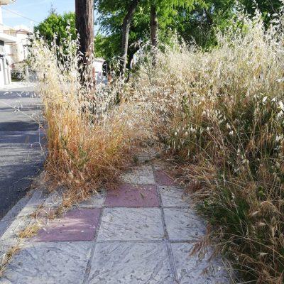 kozan.gr: Νέα παράπονα αναγνώστη: Η κατάσταση με τα χόρτα στην οδό Αιανής στην πόλη της Κοζάνης αναγκάζει τους πεζούς να περπατούν μέσα στο δρόμο αντί για τα πεζοδρόμια (Φωτογραφίες)
