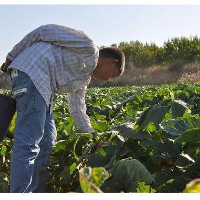 Ευελιξία στην απασχόληση εργατών γης προτείνει το Αμύνταιο