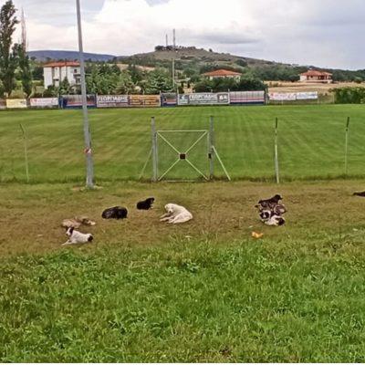 Παράπονα αναγνώστη στο kozan.gr: Πλέον η κατάσταση με τα αδέσποτα σκυλιά στο Δρέπανο έχει ξεφύγει
