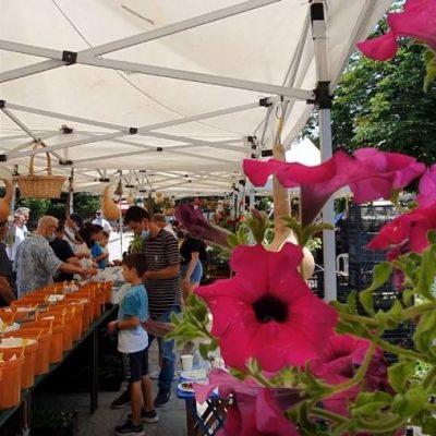 Γρεβενά: Mοίρασαν ΔΩΡΕΑΝ σπόρους και φυτά από παραδοσιακές ποικιλίες (Bίντεο & Φωτογραφίες)