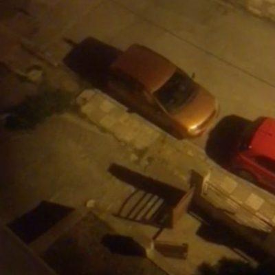 kozan.gr: Κοζάνη: Ώρα 23:15: Bίντεο με μινκ να βγαίνουν από την αυλή σπιτιού επί της οδού Δραγατσανίου, κοντά στο νοσοκομείο